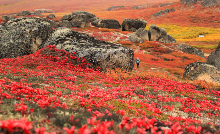 9. Fall may be a short season in Alaska, but our foliage is truly a natural phenomenon that puts every other state to shame.
