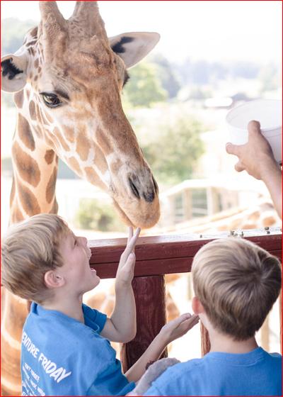Giraffe-feeding-image