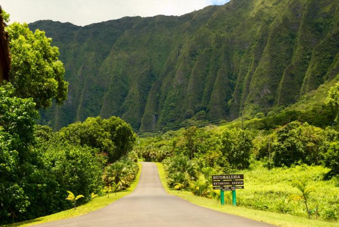 A little hawaiian aloha and mahalo for you - 3 part 4