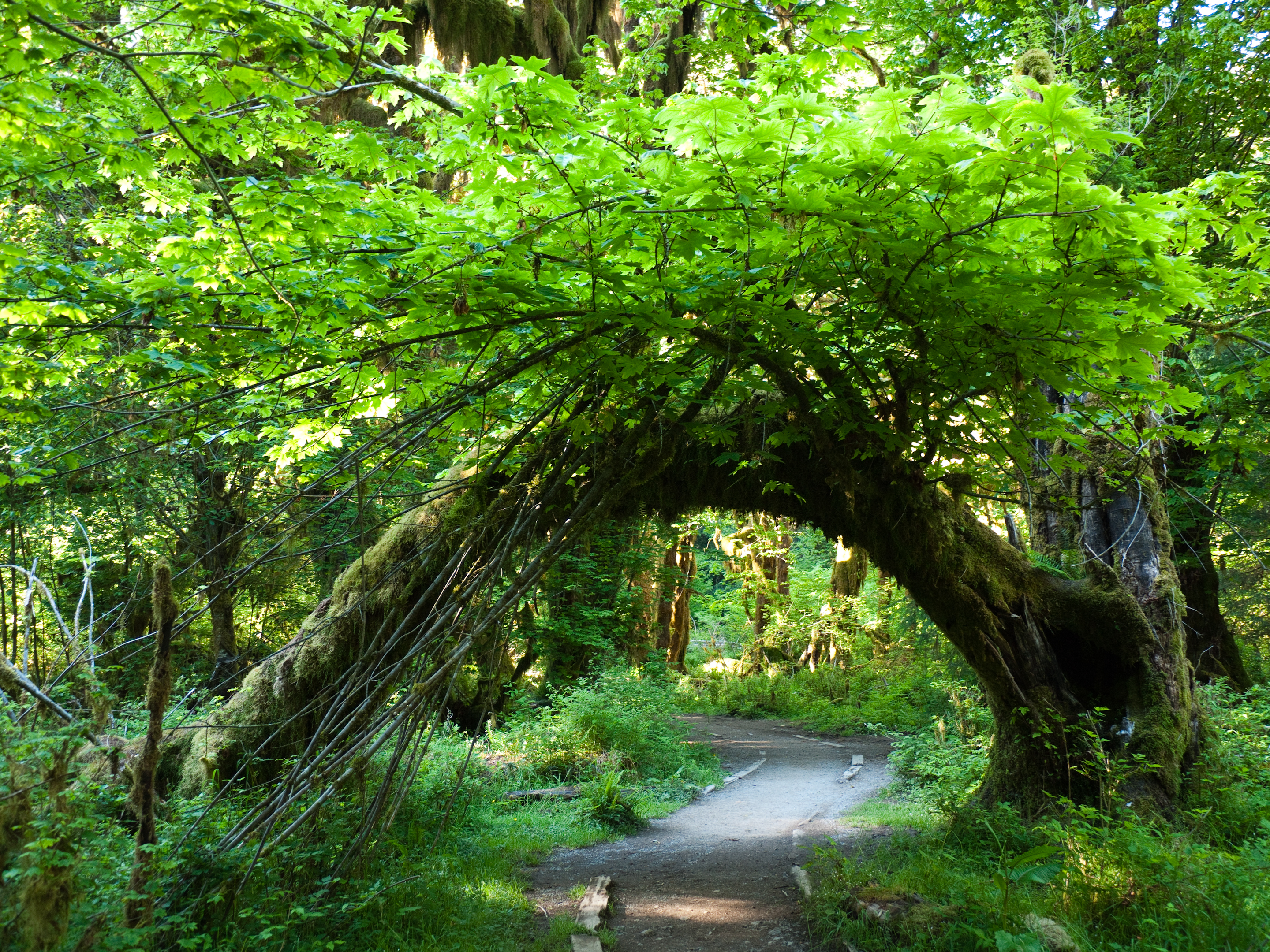 The Hall Of Mosses Trail In Washington Is Like Something