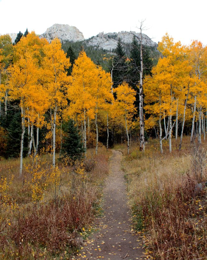 You'll travel through a narrow valley with bright bursts of autumn glory...