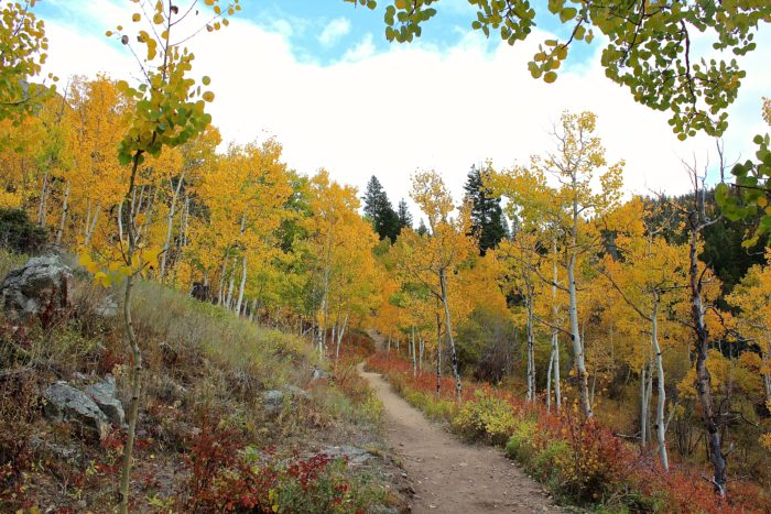 The luxuriant mix of aspens stands, evergreen forests, and open meadows is sublimely serene.