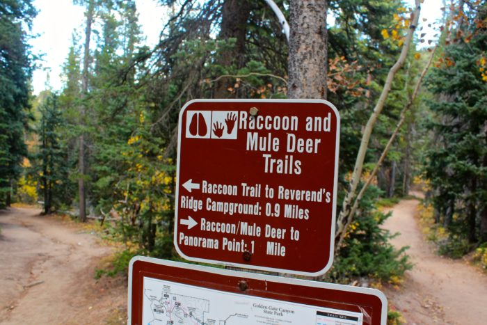 The Raccoon Trail loops back to the start at Reverend's Ridge Campground, and the trails are very well-marked, but be sure take a map in case you decide to add on additional routes.