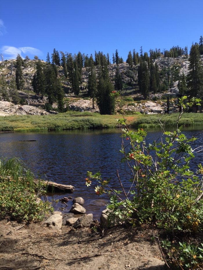 6. Just before you reach the final leg of this hike, you'll come to Shirley Lake. This sparkling alpine lake features rocks for lounging or diving as well as an epic view of Squaw Valley's backside and the Shirley Canyon chairlift.