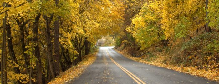 Take a scenic drive and let the watercolor leaves swirl around you in prismatic color.