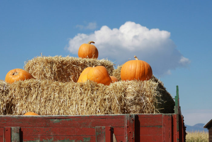A general admission ticket covers the corn maze, a hayride to the pumpkin patch so that you can pick out the perfect pumpkin, and much more.