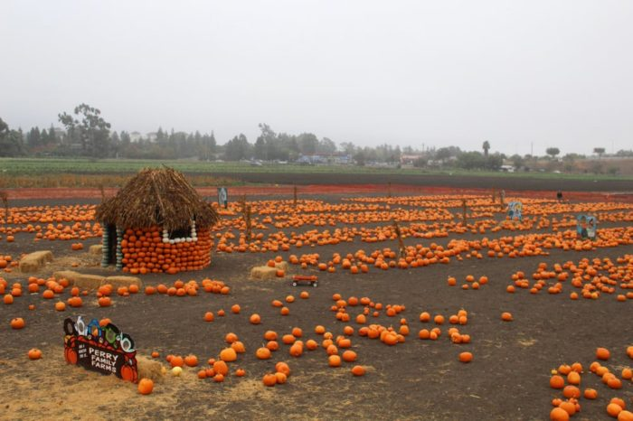 7. Perry Family Pumpkin Patch: 34600 Ardenwood Blvd, Fremont