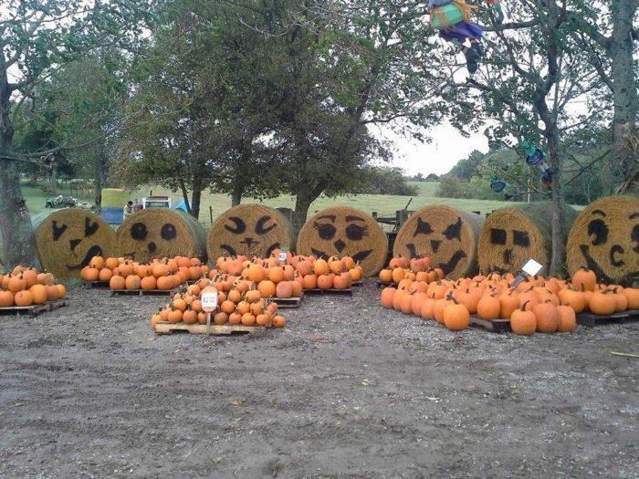 6. Pumpkin Hilll - Mt. Juliet