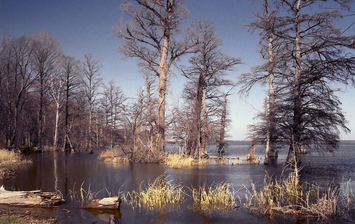 3. Reelfoot Lake