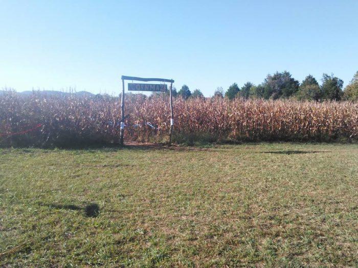 6. Sally Gap Pumpkin Patch, Williamsburg