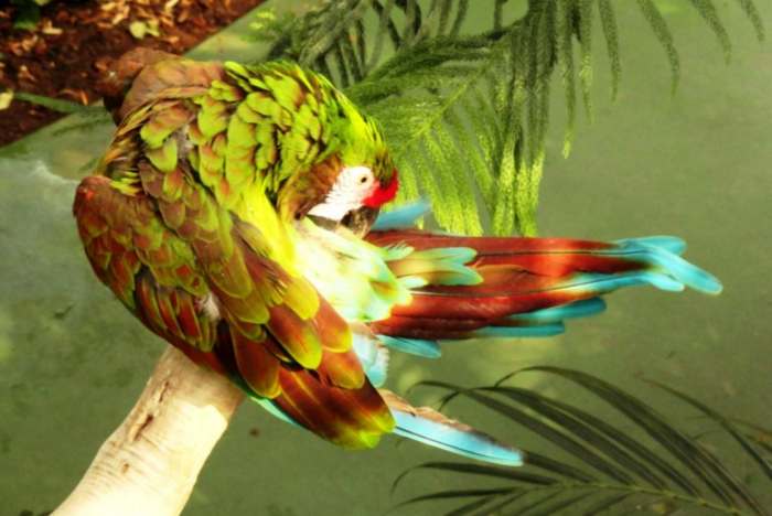 There's more than just reptiles, too. Exotic birds like parrots and eagles can be viewed here.