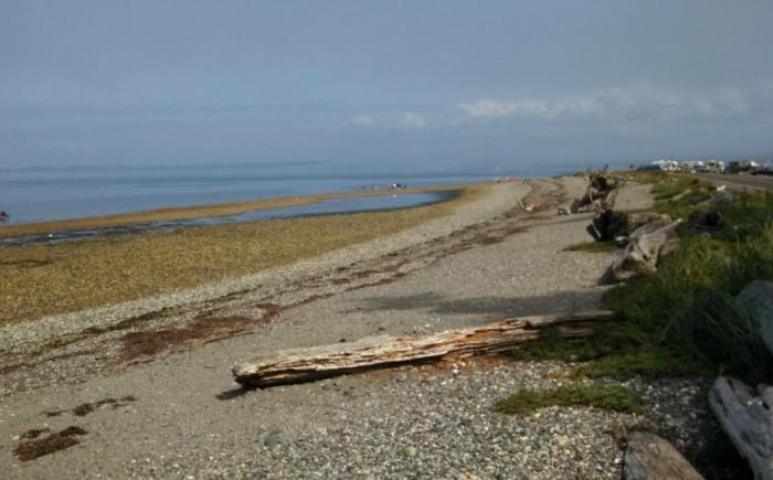 3. Birch Bay State Park