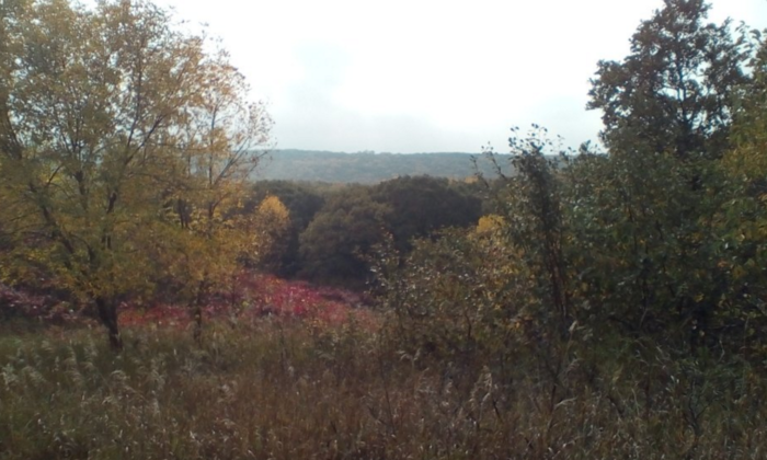 And this time of the year it is especially breathtaking, when the forest is alight with the colors of autumn.
