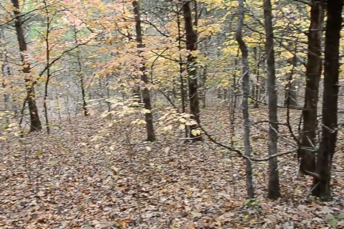 Take in the fresh scents of fall as you bask in this wooded remote area of Missouri.