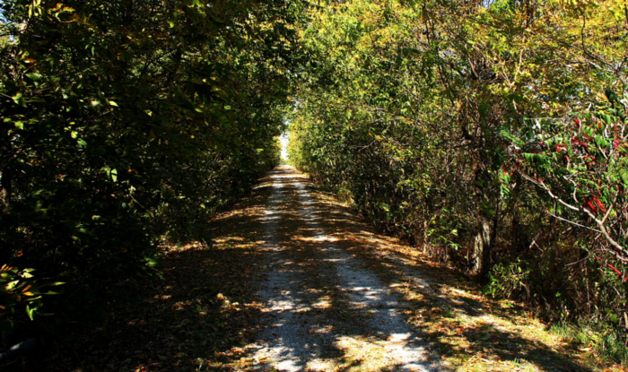 The trail is especially beautiful to see in the fall, while the weather is cool and crisp and the leaves are changing.