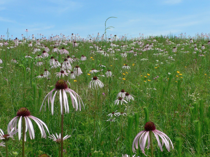 At mile 32, you'll come across La Petite Gemme Prairie. This beautiful native tallgrass prairie is the only publicly-owned virgin prairie in Polk County.
