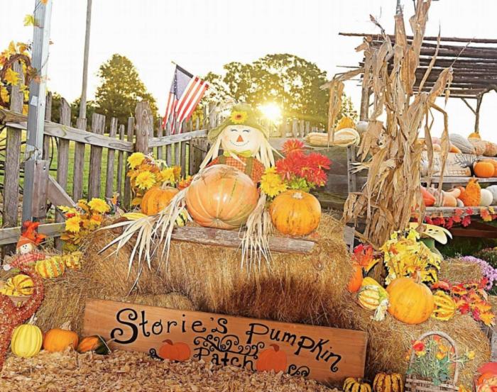 5. Storie's Pumpkin Patch - Waynesville