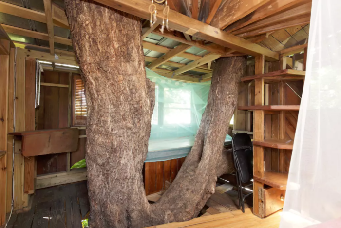 There are plenty of openings to let the light in, and your bedroom is built right around a massive tree. You'll feel like you're literally living in the treetops.