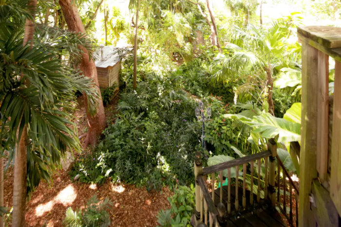 The treehouse looks out over the lush surrounding foliage on one side and the tree canopy on the other.