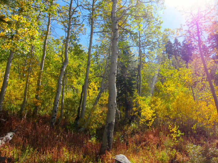 4. Drive around Lake Tahoe on Highway 28, the Lake Tahoe Scenic Byway, for non-stop shades of fall color.