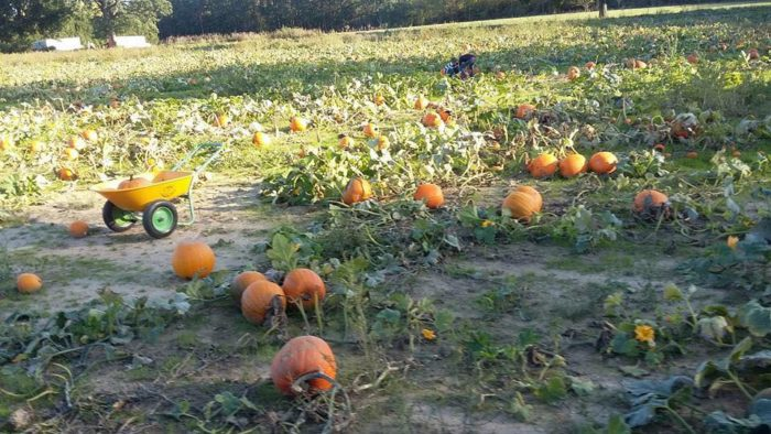 6. Thistleberry Farm - South Bend