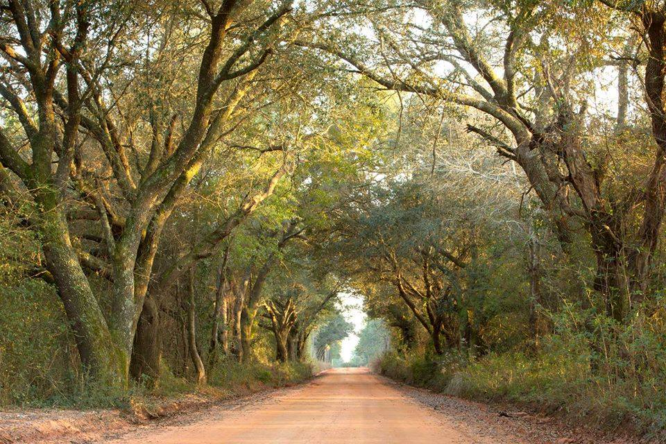 Alabama's Tunnel Of Trees: The Elberta Tree Tunnel