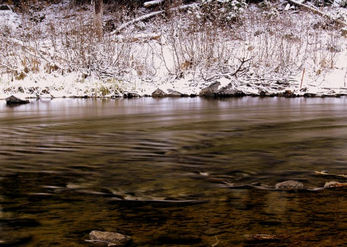The fish lurk just below the surface of this clear and cold mountain run off.