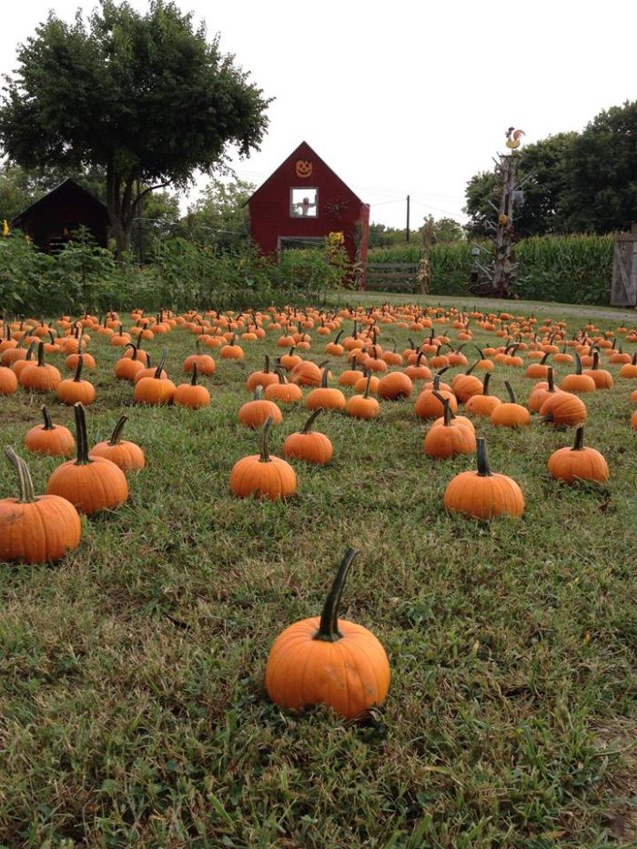 2. Walden Pumpkin Farm - Smyrna