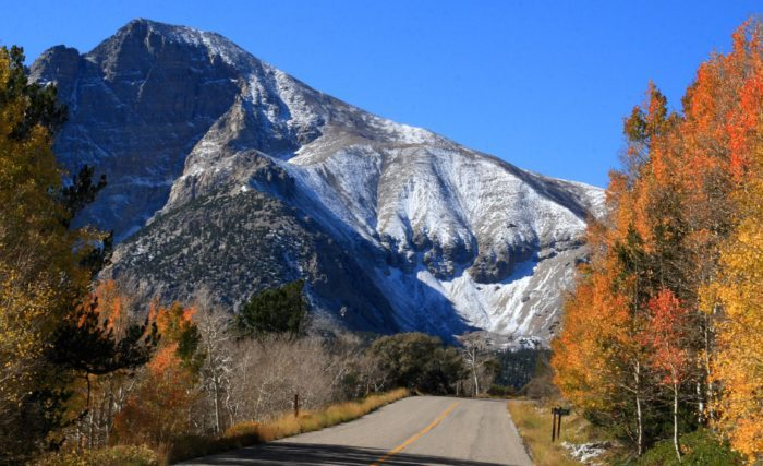 2. Surround yourself with fall foliage on the 12-mile Wheeler Peak Scenic Drive.