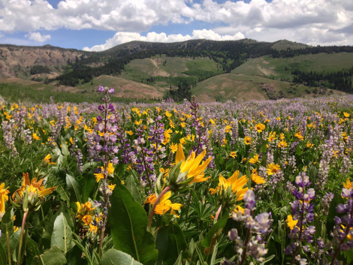 More than 60 varieties of wildflowers grow in the wilderness area.