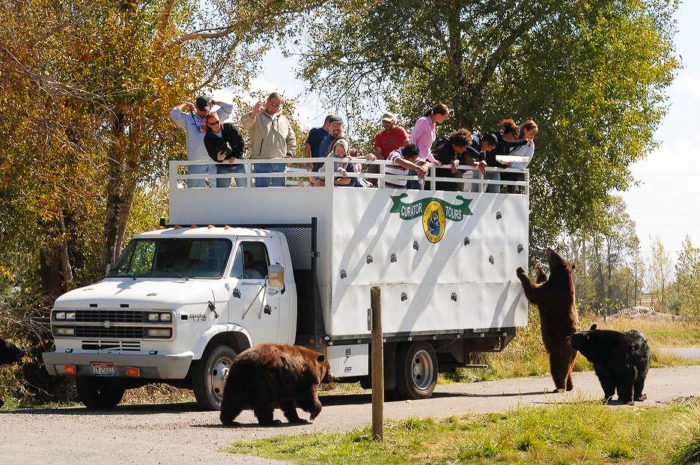 Yellowstone Bear World - Things to Do in Idaho