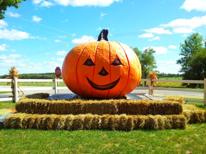 8. Pick your own pumpkin and decorate it.