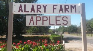These 6 Charming Apple Orchards In New Mexico Are Picture Perfect For A Fall Day