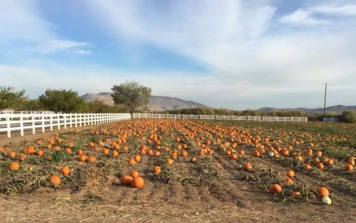 1. Andelin Family Farm Pumpkin Patch – 8100 Pyramid Highway, Spanish Springs