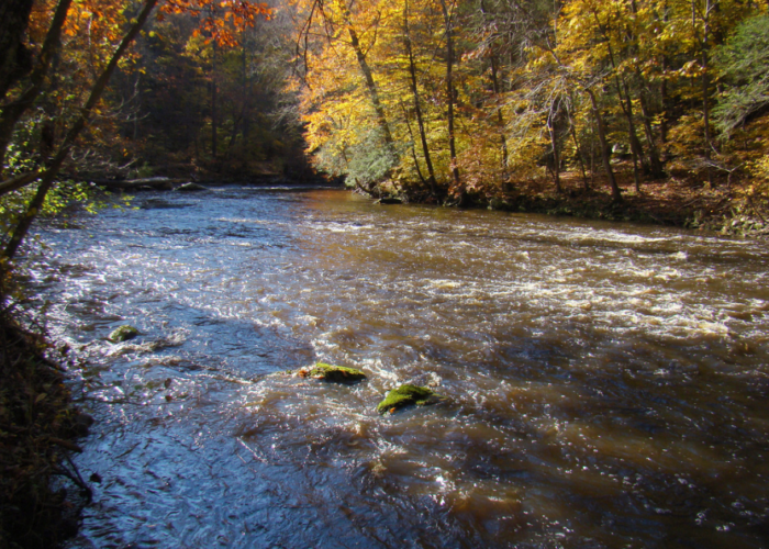 In the fall, the gorge comes alive with color and an abundance of beautiful birds.