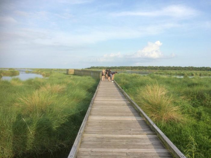7) Bayou Sauvage Trail, Bayou Sauvage National Wildlife Refuge