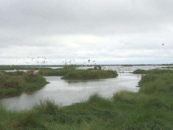 2. Bayou Sauvage National Wildlife Refuge, Louisiana 434, Lacombe
