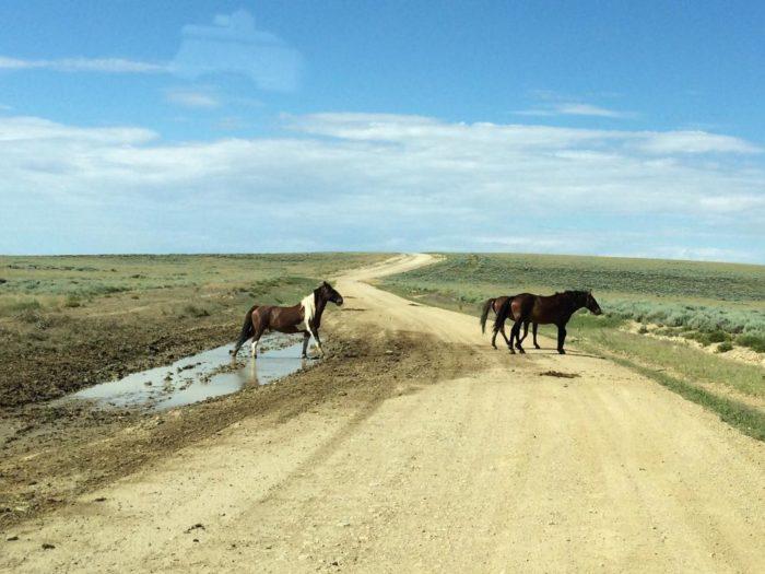 beautiful-wild-horses