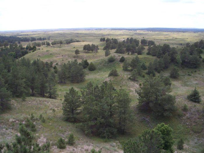 10. Nebraska National Forest, Bessey Ranger District, Halsey