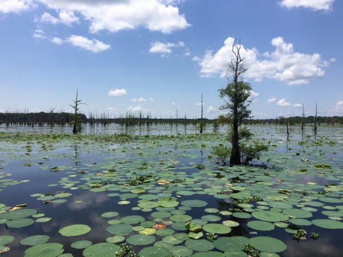 8. Black Bayou Lake National Wildlife Refuge, 480 Richland Pl, Monroe