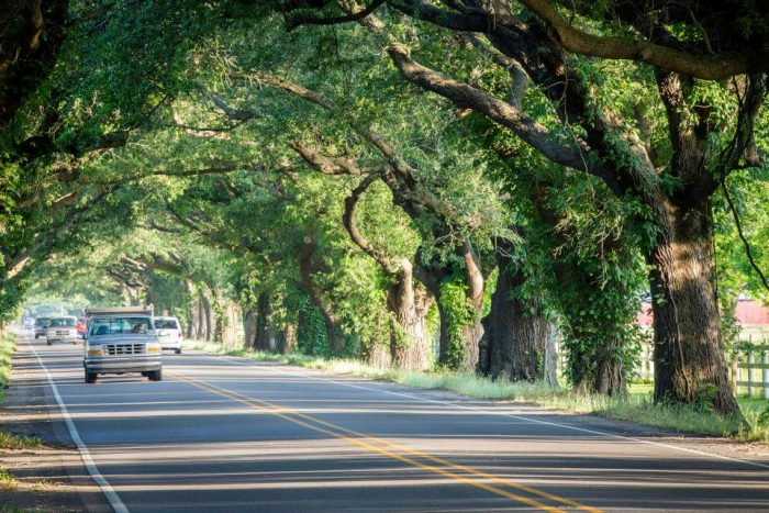 The trees line the way along Meraux Foundation's Docville Farms, which is an amazing event and community oriented venue in St. Bernard Parish.