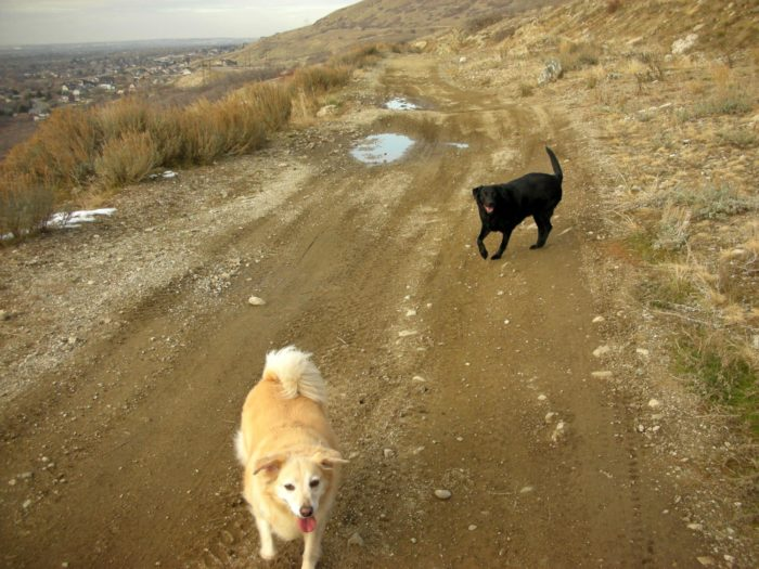 Your dogs are welcome on this hike! Please clean up after them.