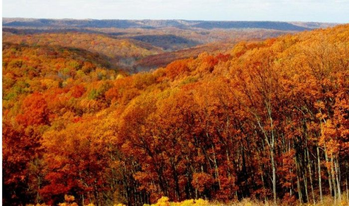 brown county foliage