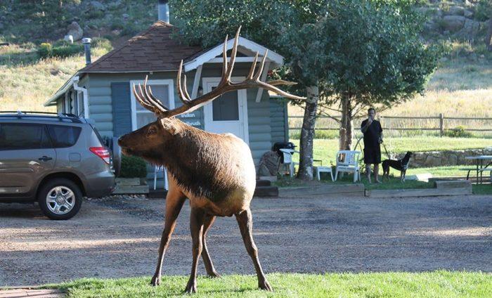 1. Colorado Cottages (Estes Park)