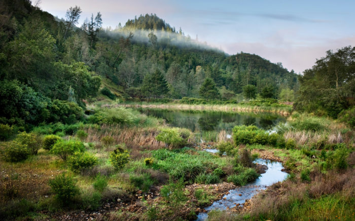 Calistoga Resort is located in the Upper Napa Valley canyon. Catch a glimpse of the local flora and fauna on your stay here, like the majestic oak trees and natural wildlife.