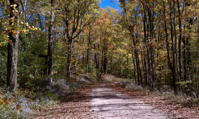 Hiking trails are plentiful, and there's something for all abilities and experience levels. In fact, the Appalachian Trail runs through this state forest.