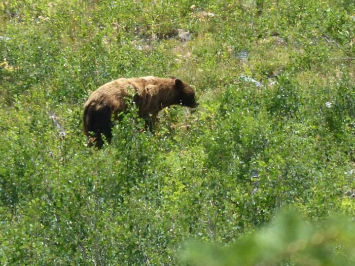 Bears are often spotted along this part of the trail so be sure to take along some bear spray.