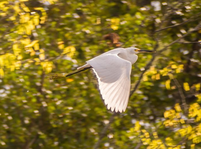 You may spy some beautiful wildlife on your way, like this snowy egret.