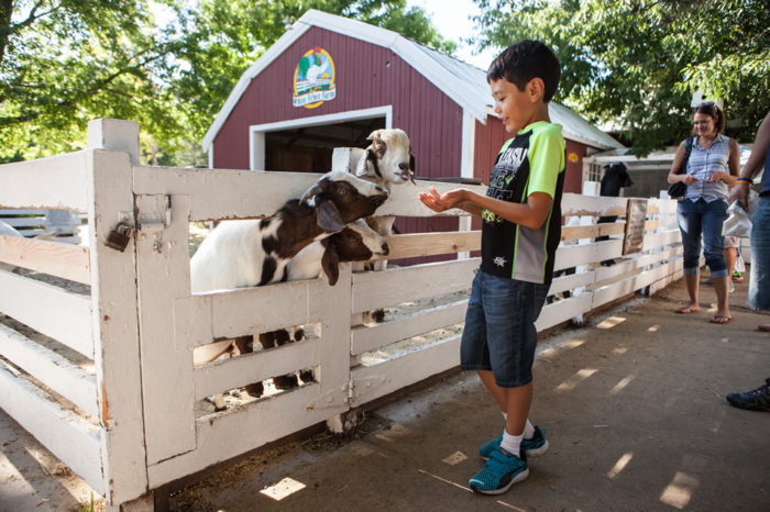 """...and the """"O.K. Corral"""" (aka petting zoo) where your kiddos will delight in feeding the gentle animals."""