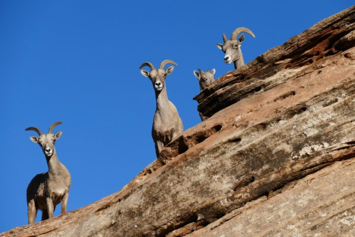 With any luck, you'll see some of the bighorn sheep who reside in this canyon.